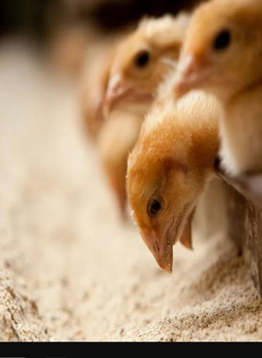animals-feed